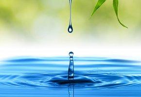 Обои вода, капли, макро, всплеск, листик