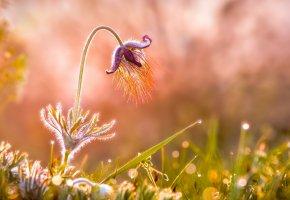 Обои трава, роса, капли, цветок, фон