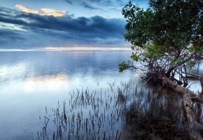 Обои Озеро, небо, пейзаж, деревья, листья, ствол