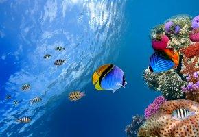Обои рыбки, тропические, кораллы, блики, вода
