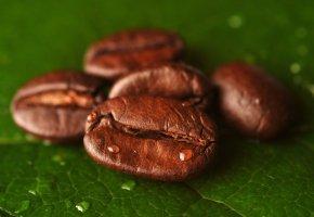 Обои кофе, зерна, лист, капли