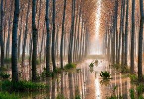 Обои лес, осины, деревья, болото
