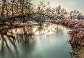 Обои деревья, река, снег, иней, утро