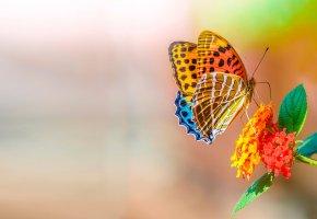 Обои бабочка, макро, цветы, листья, усики, крылья
