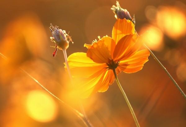 Картинки по запросу цветы и солнце