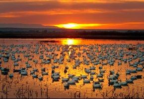 Обои река, закат, птицы, горизонт, солнце