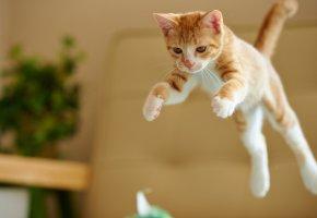 Обои Котенок, кот, рыжий, прыжок, лапы, хвост