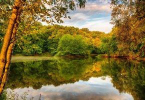 Обои пруд, озеро, лес, деревья, небо, вечер, рыбалка