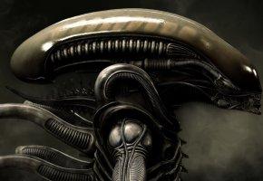 Обои Чужой, Alien, Голова Чужого, Aliens