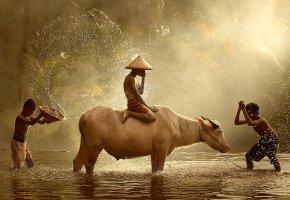 Обои Азия, купание, брызги, буйвол, река, дети