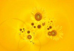 Обои подсолнухи, желтый фон, лепестки, семечки