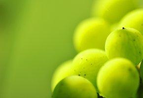 Обои зеленая, крыжовник, точки, макро, Ягода
