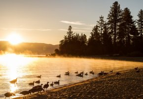 Обои утро, озеро, туман, утки, пейзаж, солнце