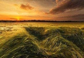 Обои небо, закат, солнце, поле, колосья