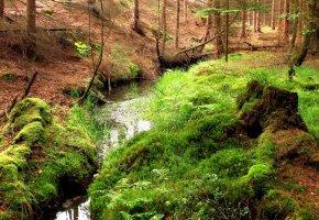 Обои лес, ручей, пень, мох, пейзаж
