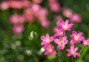 Обои трава, лепестки, розовые цветы, букет
