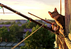 Обои кот, кошка, удивление, уши, глаза