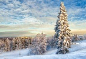 Обои пейзаж, Зима, снег, елки, облака