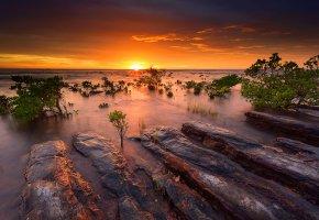 Обои Австралия, вечер, закат, мангровые кусты, море, океан, вода, камни, небо, солнце