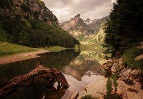 Обои озеро, горы, пейзаж, коряга, тишина, берег