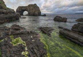 Обои море, скалы, пейзаж, водоросли, камни