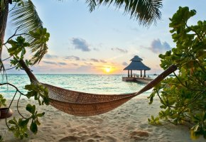 ���� tropical, paradise, beach, palms, sea, ocean, sunshine, summer, vacation, hammock, ����, ����, ������, �������, �����, �����