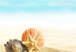 ���� shells, seashells, sand, beach, summer