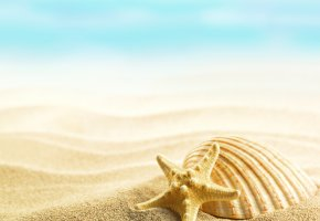 ���� summer, seashells, shells, sand, beach