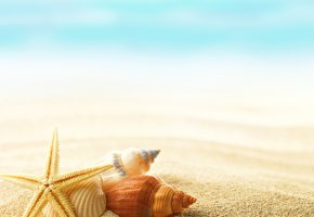 Обои summer, seashells, shells