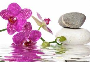 Обои вода, орхидея, спа, камни