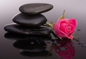 Обои бутоны, камни, роза, капли