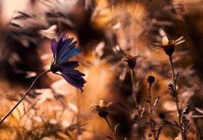 Обои размытие, фон, цветы, поле, лепестки