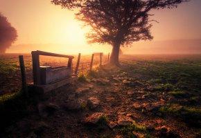 Обои поле, забор, туман, утро, дерево, земля, трава