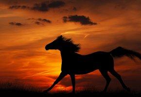 Обои лошадь, небо, облака, закат, силуэт