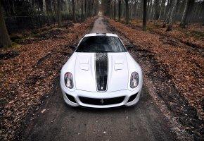 Обои осень, 599, лес, феррари, Ferrari, листья, gto, суперкар