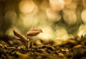 Обои макро, листик, листочки, листья, размытие