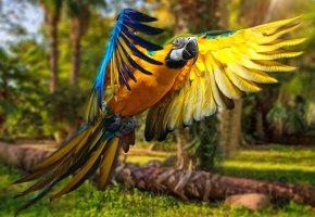 Обои деревья, попугай, полет, крылья, перья, клюв