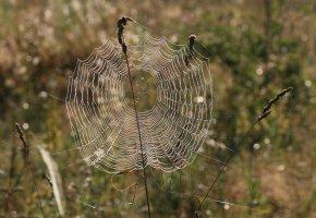 Обои трава, паутина, узор, ловушка, охота
