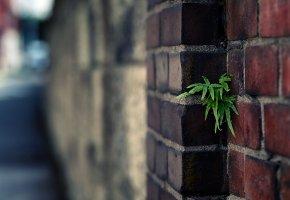 Обои plant, green, зелень, стена, дом, кирпич