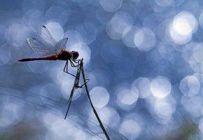 Обои травинка, блики, стрекоза, насекомое, крылья