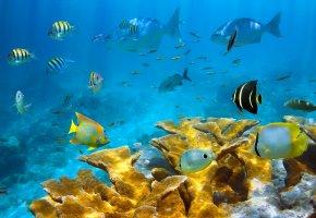 Обои море, морское дно, рыбы, кораллы