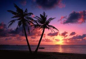Обои пейзажи, пляж, побережье, пальмы, вечер, закат, море