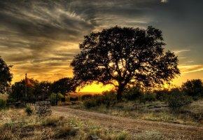 Обои дорога, трава, деревья, закат, вечер, небо, пейзажи