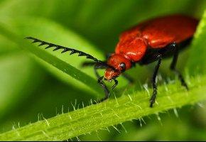Обои жук, растение, усы, лапы