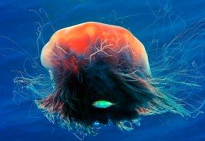 Обои медуза, рыбка, море, цвет