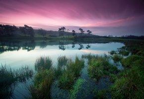 Обои деревья, берег, Озеро, трава, утро